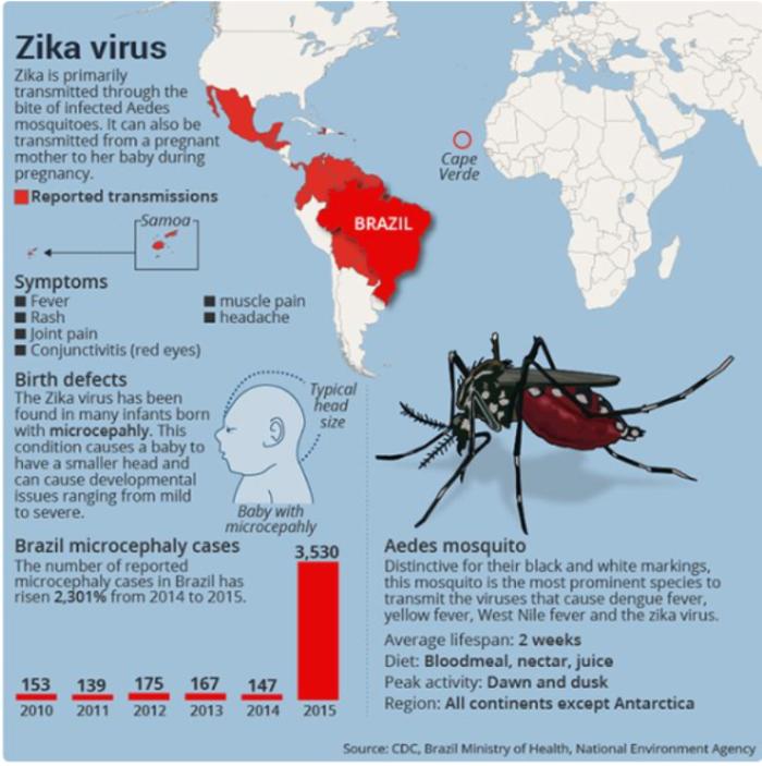 Zika Virus_772