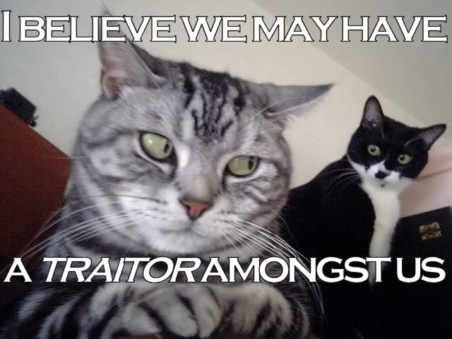 cat-traitor