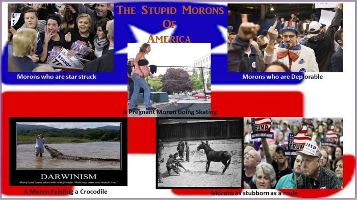 stupidmorons_x1900